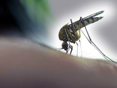 Over 300 People Test Positive For Dengue In Dehradun