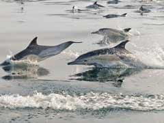 Yes, Minister! Dolphins Got Blind Because Of Pollution, Says Ministry