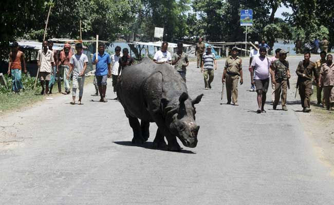 Kaziranga National Park Eviction Drive Turns Violent, 2 Killed