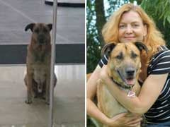 Flight Attendant Adopts Loyal Stray Dog Who Waited Outside Her Hotel