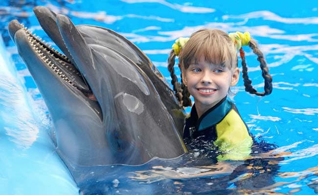 Will Hawaii Ban Swimming With Dolphins?