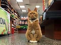 Cat Runs Store For 9 Years Without Taking A Day Off