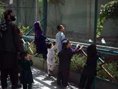 Kabul's Once Battle-Scarred Zoo Roars Back To Life