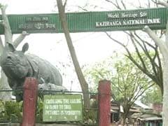 First Rhino Death Of 2017 Reported In Kaziranga
