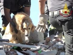 Romeo Retrieved: The Miracle Survivor Of Italy Earthquake