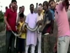 Rajasthan Man Tries Snapping Selfie With A Python. Does Not Go Well