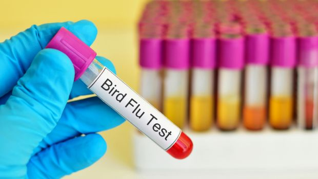 Bird Flu Hits British Turkey Farm