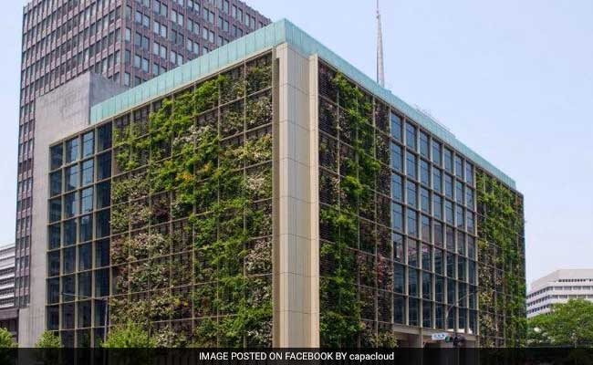 Delhi May Solve Its Air Pollution Problem With 'Vertical Gardens'