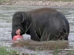 Baby Elephant Rushes To Save 'Drowning' Human Friend In Video Gone Viral