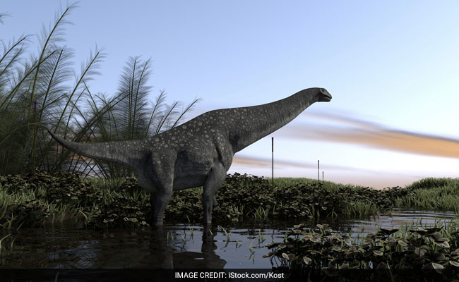 Scientists announce discovery of Brazil's largest dinosaur