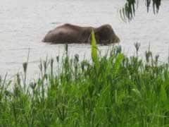 सिद्धा हाथी को बचाने की कोशिशें शुरू, असम और केरल से विशेषज्ञ बुलाए गए