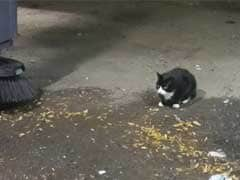 Stray Cat Patrol: Feral Felines Deployed In NYC War On Rats