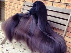 Stylish Australian Dog Becomes Internet Sensation