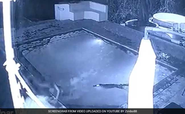 Crocodile attacks couple in swimming pool