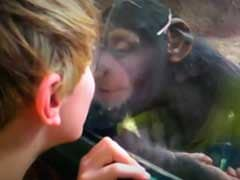 Trending: Video Compilation Shows Hilarious Moments Of Kids At The Zoo
