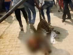 Leopard Allegedly Beaten To Death By Mob In Gurugram