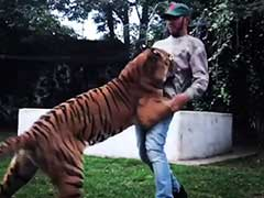 Lewis Hamilton Gets Jumped On By A Tiger Following Mexican GP Triumph