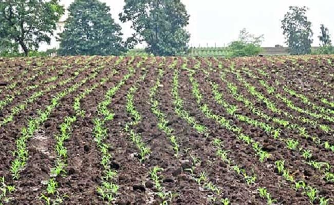 SBI Research says the farm sector faces issues like raising productivity which need attention.
