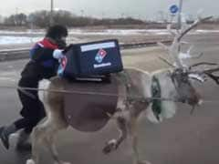 '30 Minutes Or Free'. Reindeer Being Trained To Deliver Pizza In Japan