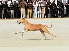 Stray Dog Problem During Jet Landing On New Agra-Lucknow Expressway