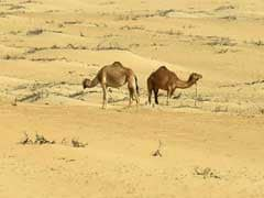 Arid Saudi Arabia Could Need '$50 Billion' In Water Investment