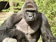 The Most Memorable Animals Of 2016 (Yes, Including Harambe)