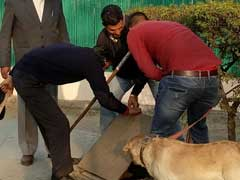 More Than 600 Cops, Sniffer Dogs Sweep JNU Campus To Find Missing Student Najeeb Ahmed