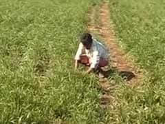 3 Farmers Commit Suicide In 24 Hours In Madhya Pradesh