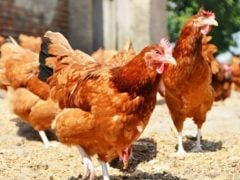Hong Kong Bans Poultry Products from Japan, Britain