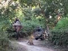 Hair-Raising Video Shows What Not To Do When You Spot A Tiger In The Wild