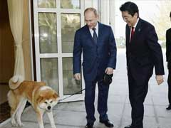 Russia Declines Japanese Dog Diplomacy Ahead Of Summit