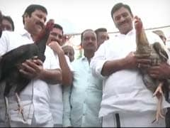 Despite Ban, 'Recreational Sport' Cockfight A Huge Hit In Andhra Pradesh