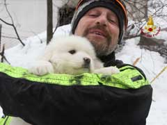 Three Dogs Rescued Five Days After Italy Avalanche