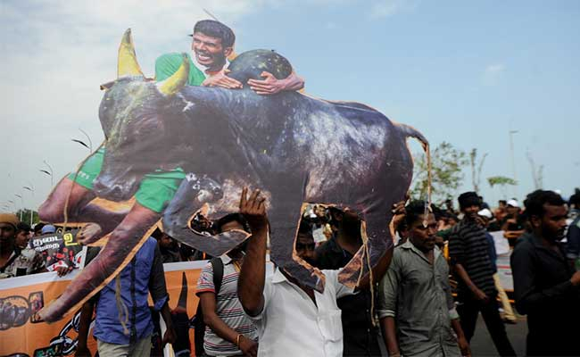 Order Allowing Jallikattu Moves Up The Ranks To The President: 10 Facts