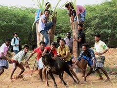 Several Jallikattu Supporters Detained In Tamil Nadu