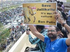 Foreign Media On Jallikattu And The Backlash Against PETA
