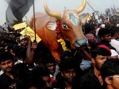After Jallikattu, Calls For Lifting Ban On Animal Sport In Maharashtra, Karnataka