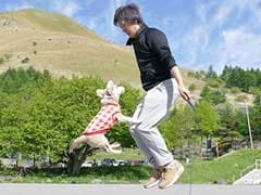 Dog, Owner Set New Guinness World Record For Skipping