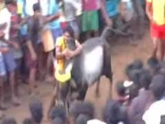 Despite Protests, Tamil Nadu Gets To Watch Some Jallikattu