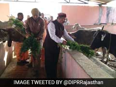 Cows Inhale And Exhale Oxygen, Says Rajasthan Minister; Twitter Explodes