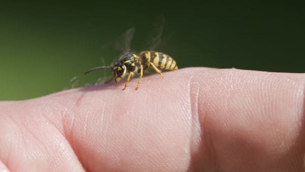 10 Brilliant Home Remedies for Bee Sting