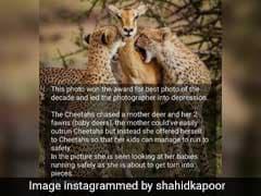 Shahid Kapoor Deletes Post After Real Story Behind Pic Goes Viral