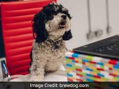 'Puppy Parental Leave' Is Now A Thing. How Paw-Some Is That?