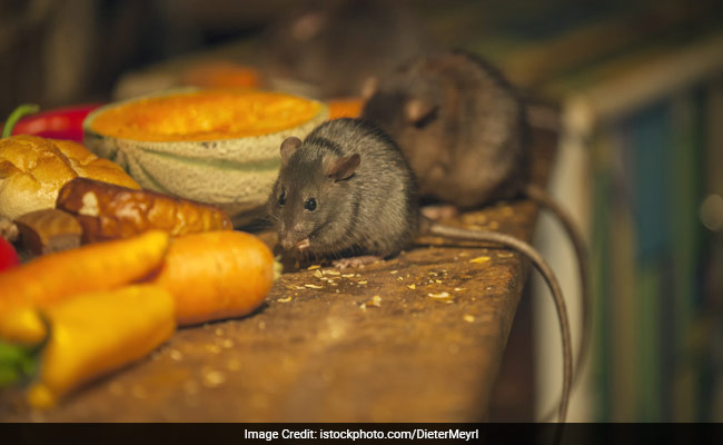 Dead Rat In Midday Meal Not One-Off Incident In Delhi: BJP