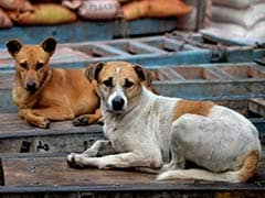 Army Major Allegedly Beats Stray Dogs To Death, Activists Seek Action Against Him