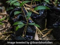 Kerala To Plant One Crore Saplings On June 5