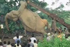 West Bengal: Speeding train kills seven elephants