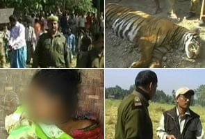 Tiger shot dead in Assam