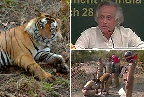 Tiger census: 295 tigers added, population estimated at 1706