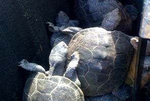 These turtles invaded Kennedy airport, delayed flights and can tweet